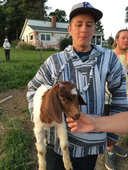 Farm goats.