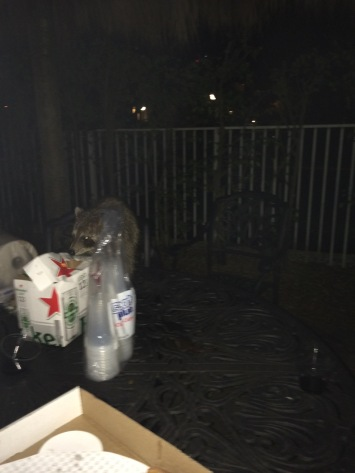 Raccoon looking for leftover pizza