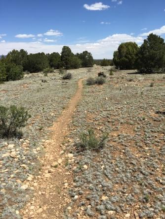 AZ Trail