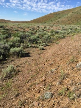 The trail ran through here