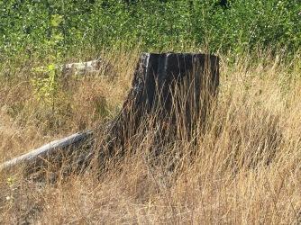 Log burned early 1920's