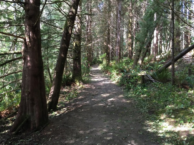 Trail at park