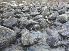 Lots of shiny rocks
