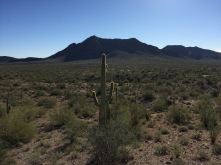 Our encampment is just to the right of the top of the Saguaro