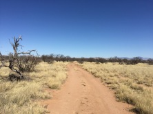 Cieneguita Camping Area road
