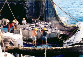 Crew sorting fish in the hopper