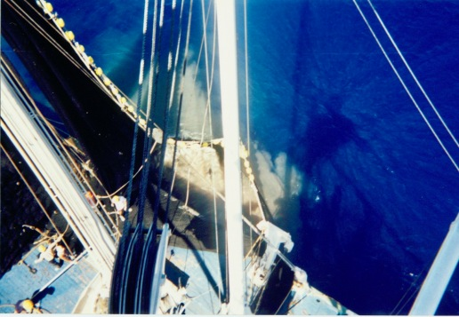 Fish in the net as viewed from the Auro's crow's nest