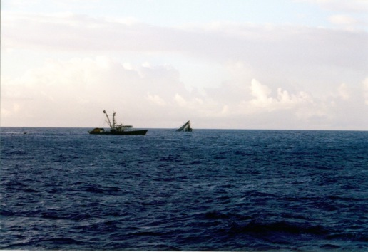 Other purse seiners fishing