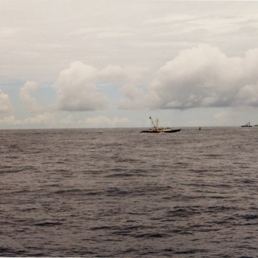 3 other purse seiners working the same area