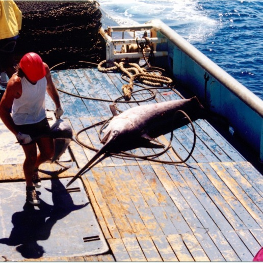 Henry (deck boss) dealing with a couple of swordfish that were caught in the net