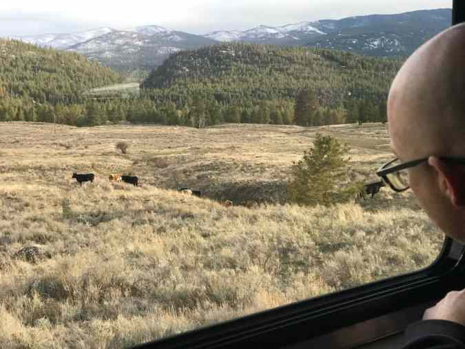 Brian watching cows